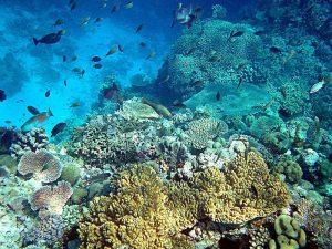 Recif-coraux